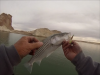 Lake Powell Fishing December 4, 2012