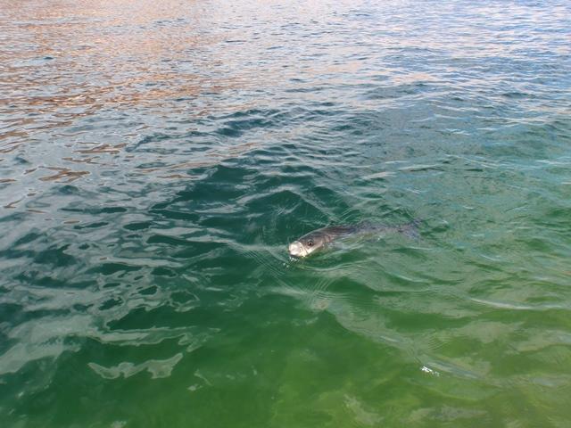 Olympus digital camera for Lake powell fishing