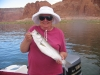 Stripers at Lake Powell