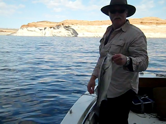 Lake powell fishing report 4 20 11 ambassador guides at for Lake powell fishing