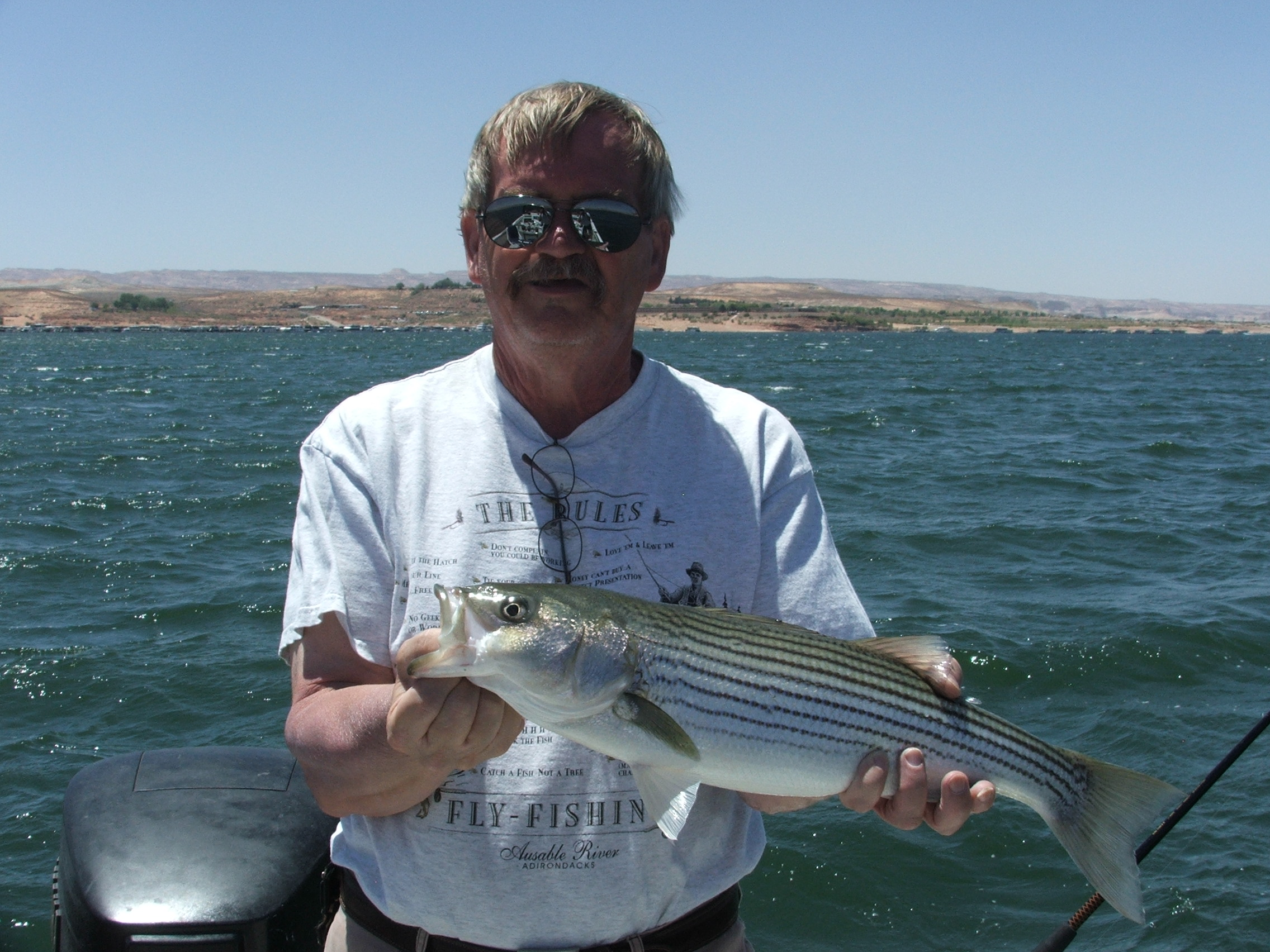 Lake powell fishing report 6 09 12 ambassador guides at for Lake powell fishing license