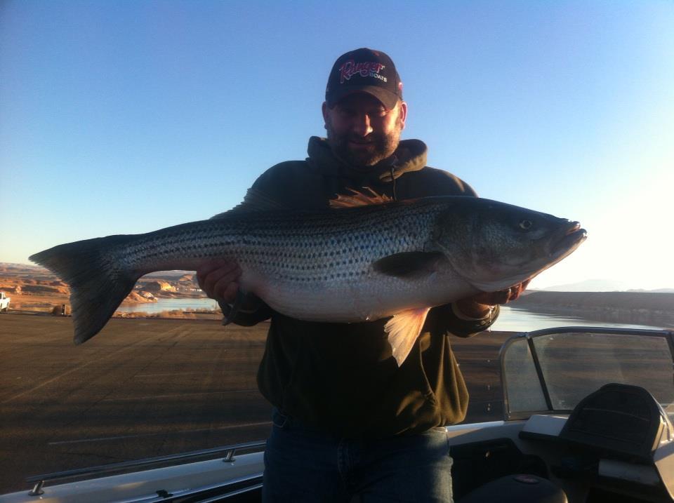 Lake powell fishing report wayne gustavson 1 23 12 for Lake powell fishing