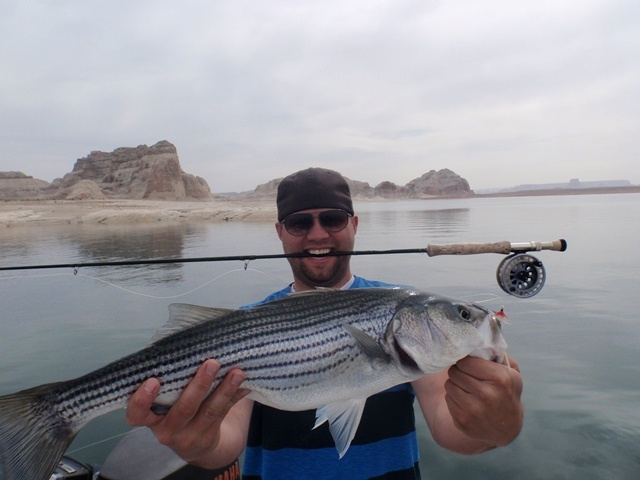 Lake powell fishing report 5 05 13 ambassador guides at for Lake powell fishing