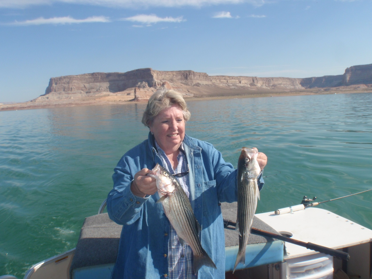Lake powell fishing report by capt bill mcburney wayne for Bills fishing report