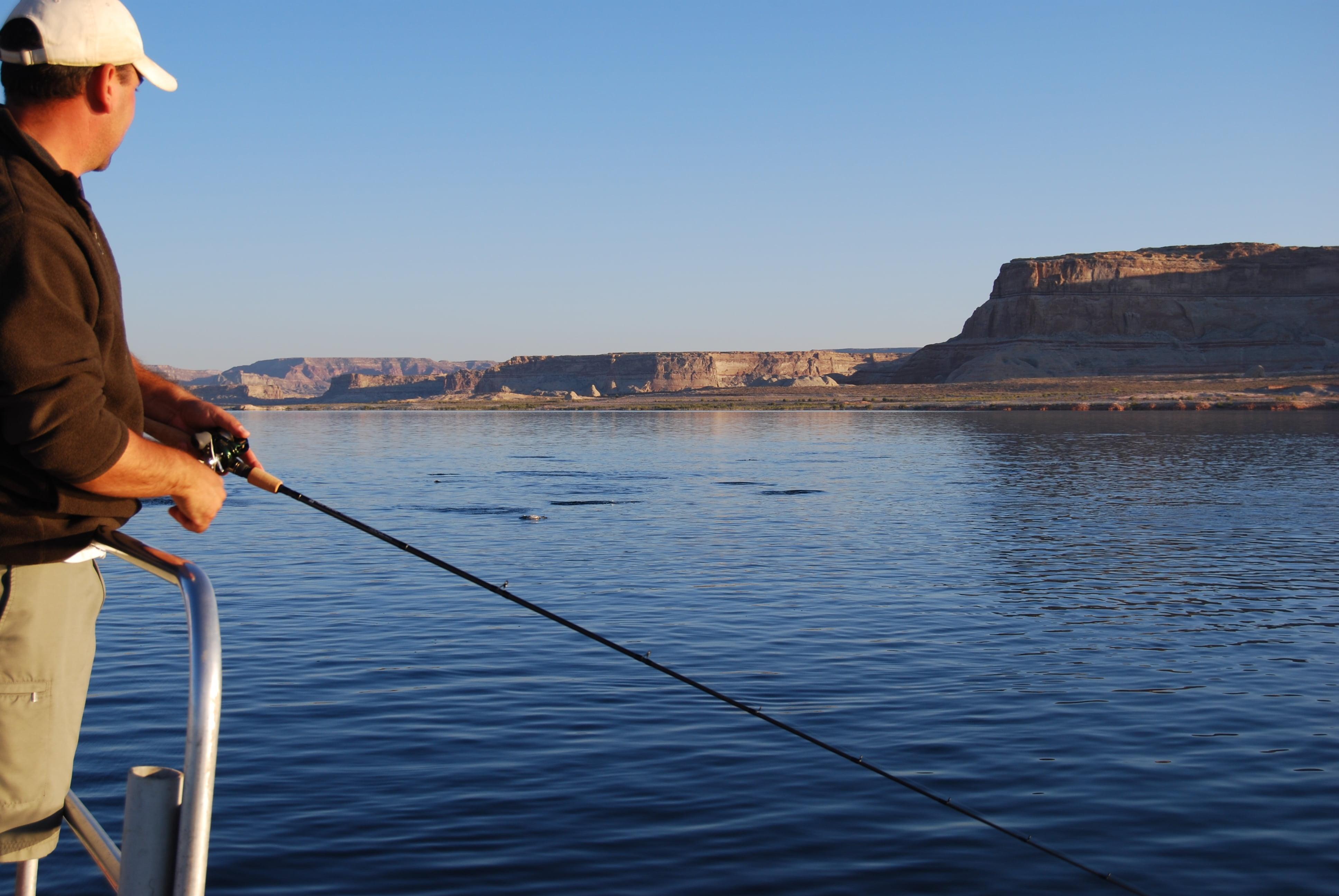 Lake powell fishing report by capt bill wayne for Lake powell fishing
