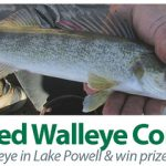 Tagged Walleye contest at Lake Powell Arizona