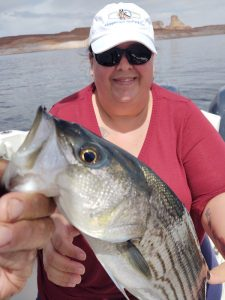 Woman from Texas shows a striped bass that she caught. Taken on Lake Powell, Arizona, with guide Captain Bill McBurney.